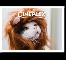 Onlinegutschein Katze